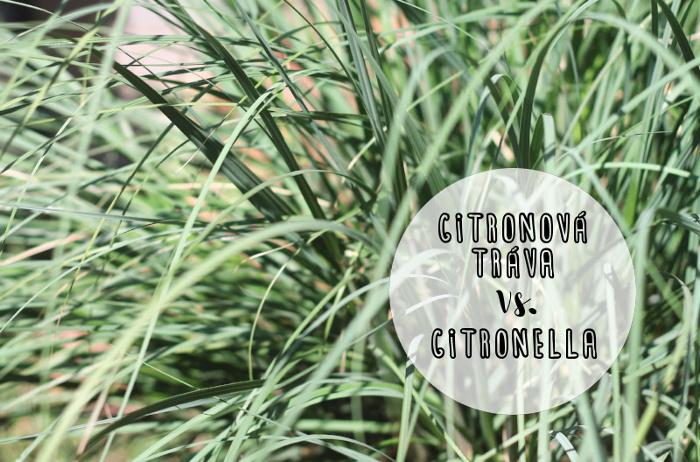 Rozdíl mezi citronovou trávou a citronellou