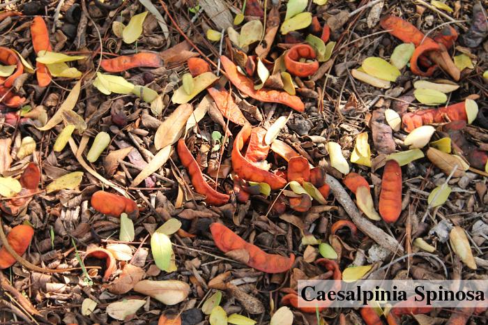 Tara lusky k výrobě tara gumy