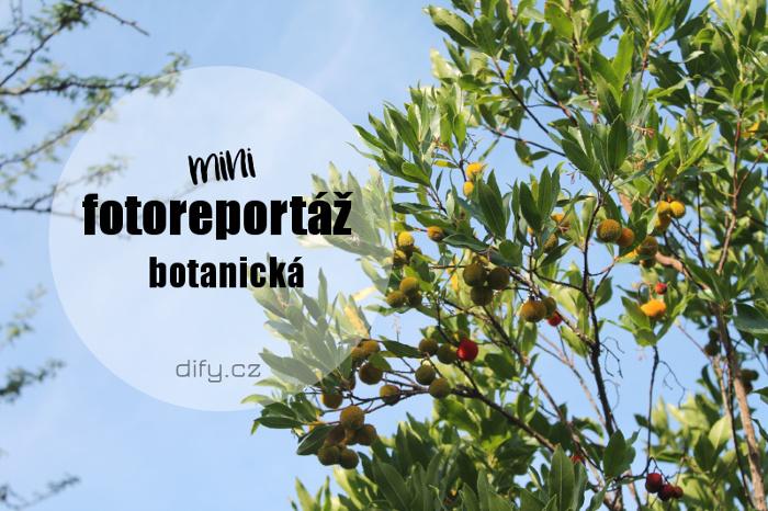 Rostliny využívané k výrobě kosmetiky - reportáž z barcelonské botanické
