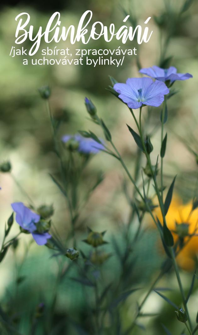 Bylinkování - jak sbírat, zpracovávat a uchovávat bylinky (nejen pro použití v domácí kosmetice)